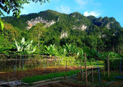 Our Organic Farm in Khao Sok