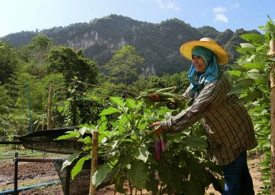 Organic Farm Khao Sok