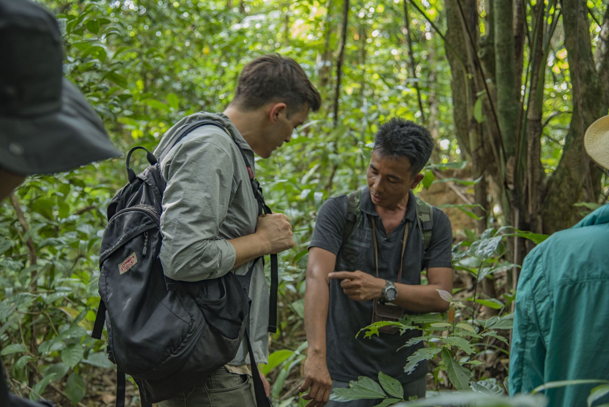 Learning about plant applications in the jungle