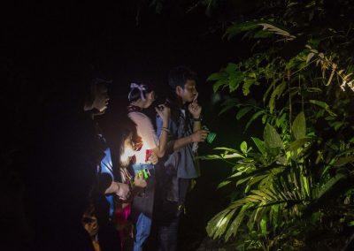 Night Safari Jungle Life Camp
