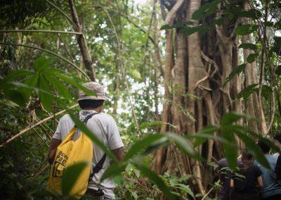 exploring the jungle of khao sok